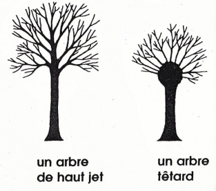 taille arbre